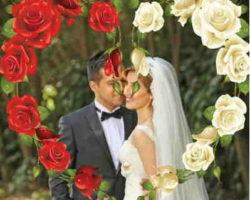 Kırmızı Ve Beyaz Güller