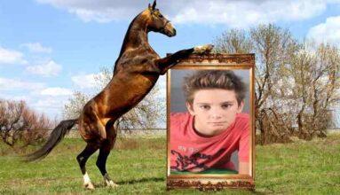 At ve Resim Çerçevesi