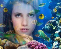 Okyanus İçinde Resim